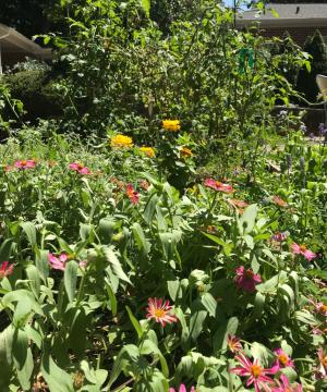 Sean Pruett garden
