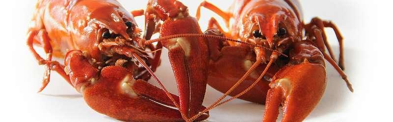 Crawfish 1584x946