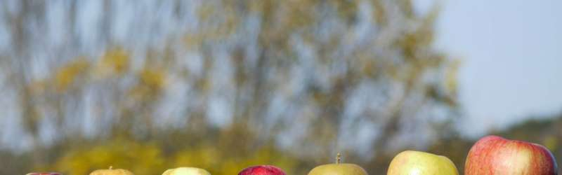 Cider apples 1584x846 rebecca siegel flickr