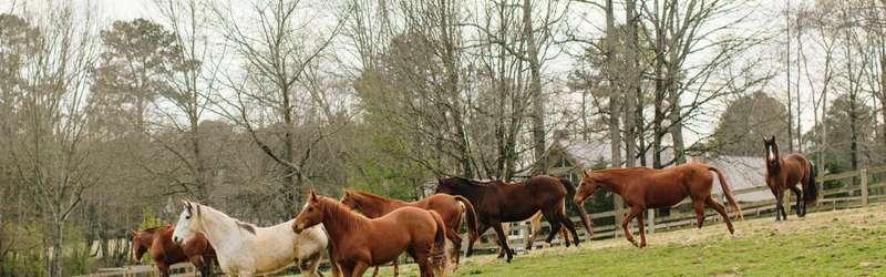 Horses hero 1584x846 ramona king