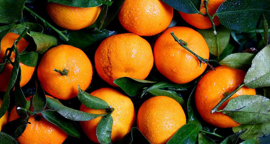 Eggnog Orange Julius Mocktail
