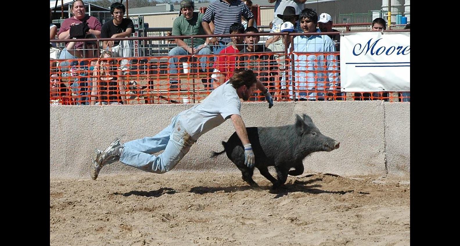 Hog racing