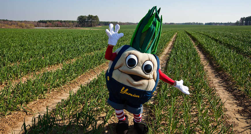 Yumion! the Vidalia Onion mascot